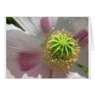 Cartão macro interno do vazio da flor da papoila