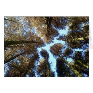 Cartão Madeiras de Dartmoor