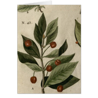 Cartão Madressilva alpina