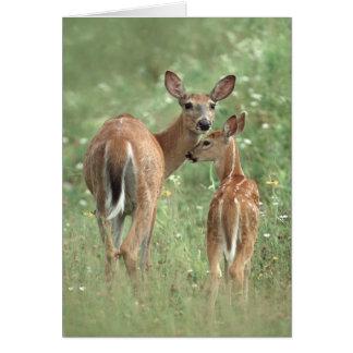 Cartão mãe e jovem corça Branco-atadas dos cervos