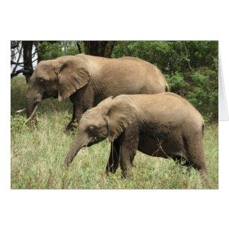 Cartão Mãe & vitela do elefante