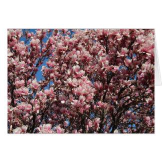 Cartão Magnólia cor-de-rosa