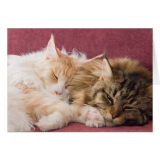 Cartão Maine Coon cats greeting card