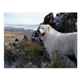 Cartão majestoso do cão da montanha