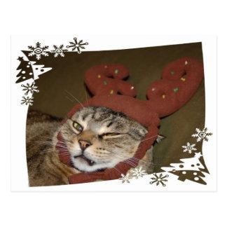 Cartão mal-humorado do Natal do gato