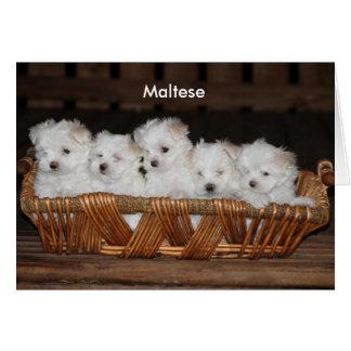 Cartão Maltês, filhote de cachorro, cesta, nota