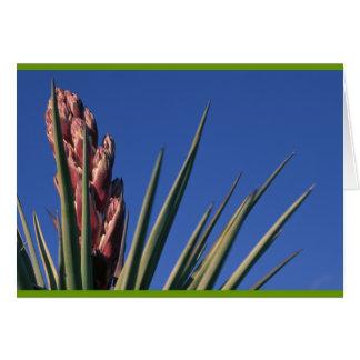 Cartão Mandioca de florescência