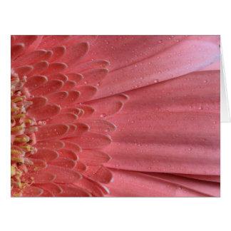 Cartão Margarida cor-de-rosa coral bonito do Gerbera