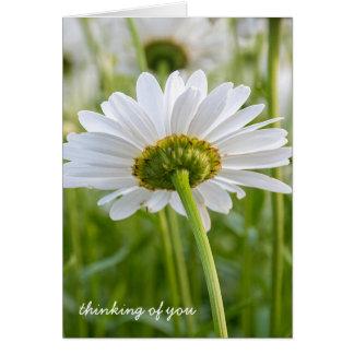 Cartão margarida-pensamento branco de você
