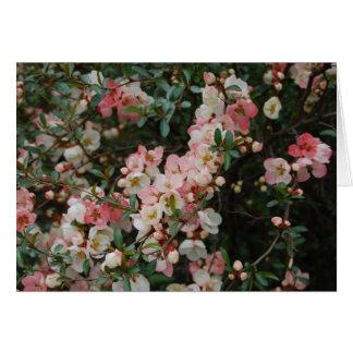 Cartão Marmelo de florescência - Central Park