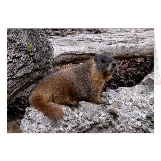 Cartão Marmota