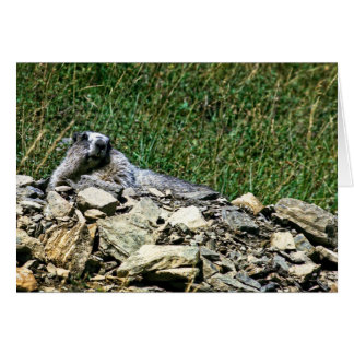 Cartão Marmota de Montana