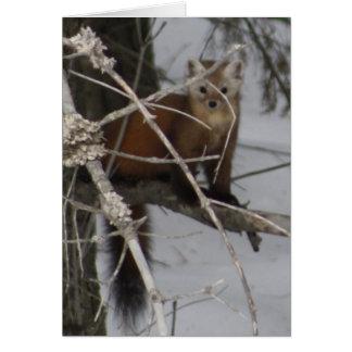 Cartão Marten de pinho norte-americano