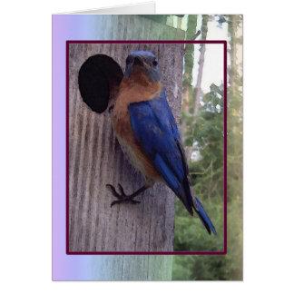 Cartão masculino do Bluebird