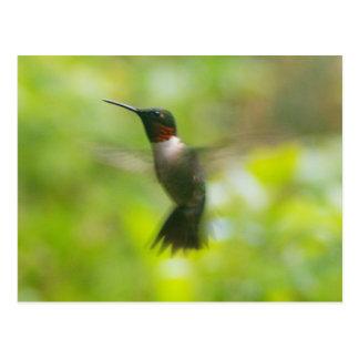 Cartão masculino do colibri da garganta do rubi