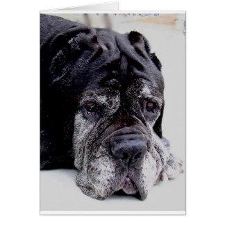 Cartão mastiff.png napolitana