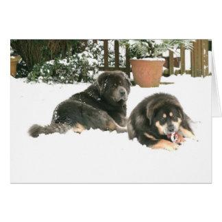 Cartão Mastiff tibetano Caspar & Jampo