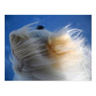 Cartão mau do cachorrinho do dia do cabelo cartões postais