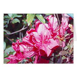 Cartão Máximo do rododendro de West Virginia