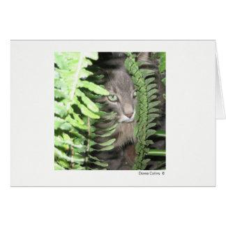 Cartão Máximo o gato #2