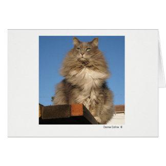 Cartão Máximo o gato   #-4