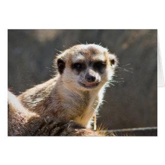 Cartão Meerkat