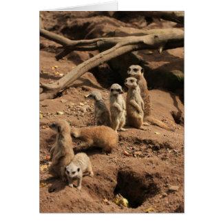 Cartão meerkats
