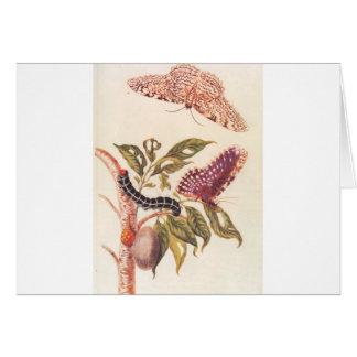 Cartão Metamorfose de uma borboleta Maria Sibylla Merian