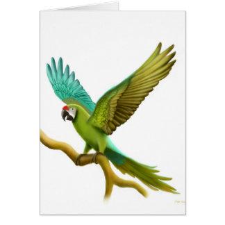 Cartão militar do Macaw