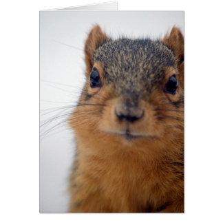Cartão Mim, esquilo