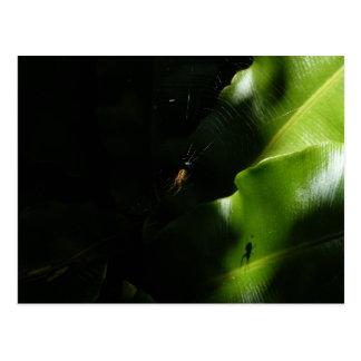 Cartão minúsculo da aranha
