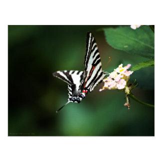 Cartão minúsculo da zebra