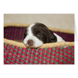 Cartão minúsculo do filhote de cachorro do Spaniel