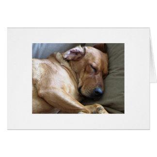 Cartão Mistura do cão de Rhodesian Ridgeback Labrador