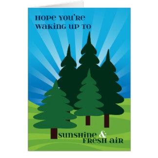 Cartão Miúdos em árvores da luz do sol do acampamento de