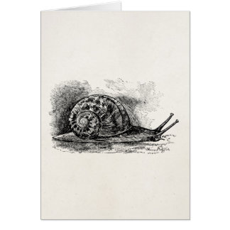 Cartão Modelo antigo de rastejamento do caracol do