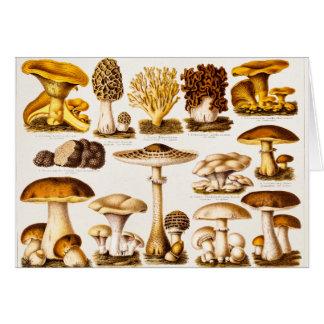 Cartão Modelo da variedade do cogumelo dos 1800s do