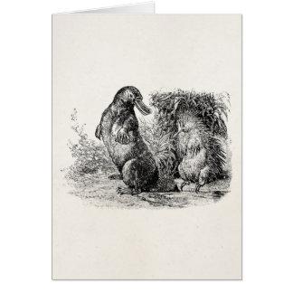 Cartão Modelo do Anteater do porco- de Platypus do