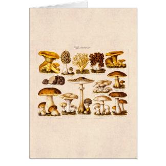 Cartão Modelo dos cogumelos da variedade do cogumelo dos