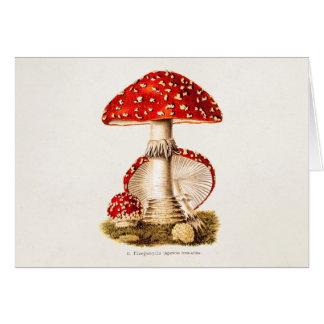 Cartão Modelo dos cogumelos do vermelho do cogumelo dos