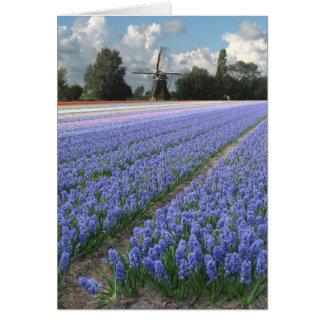 Cartão Moinho de vento azul do campo de flores do jacinto