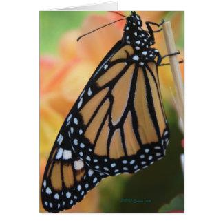 Cartão Monarca