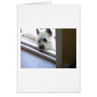 Cartão Monte de pedras Terrier de Zoe