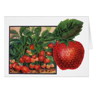 Cartão Morangos do vintage, plantas de morango em uma