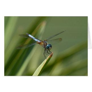 Cartão Mosca do dragão - verde azul 06