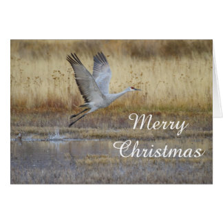 Cartão Mosca vinda comigo Feliz Natal