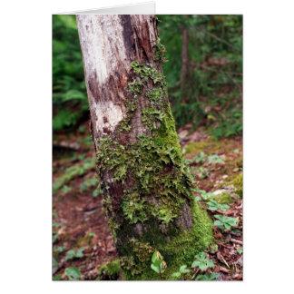 Cartão Mossy da árvore