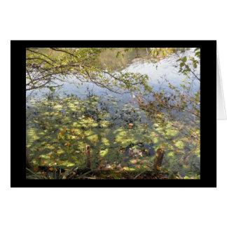 Cartão Mossy da lagoa
