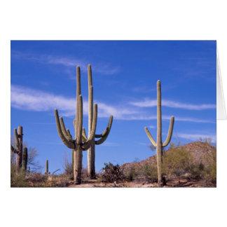 Cartão Multi cacto gigante armado do Saguaro, Saguaro