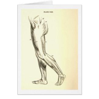 Cartão Músculos do pé da anatomia | do vintage II (CA